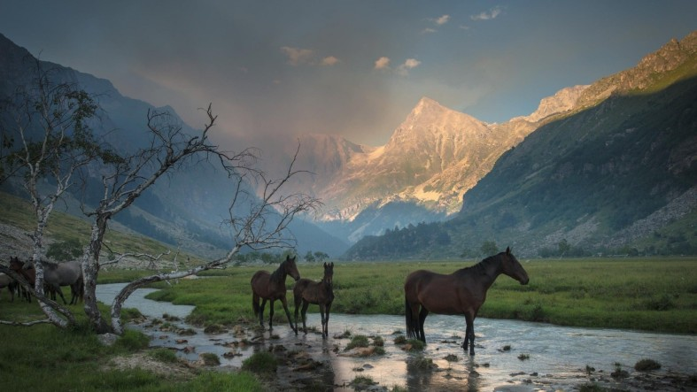 icelandic-horse-beautiful-landscape-wallpaper-1920x1080