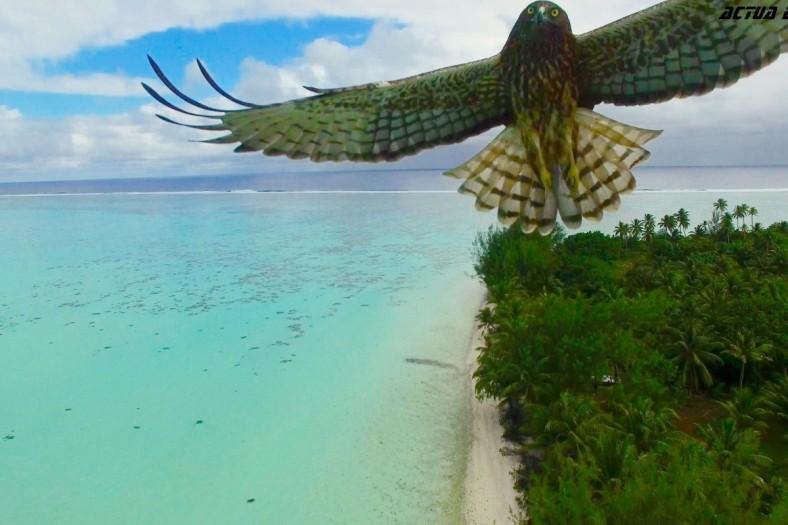 BirdDrone