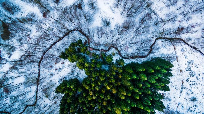 kalbyris-Forest-Drone-Photo-Denmark